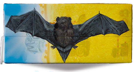 Long-tailed bat.