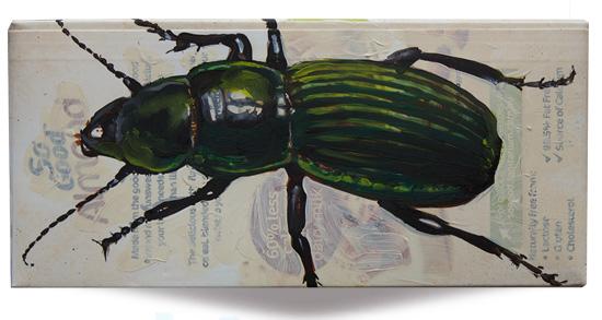 Metallic Green Ground Beetle