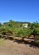 SA: McLaren Vale: Rosemount Winery