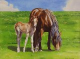 Mother and Foal   Watercolour   400x300mm plus mount and frame