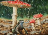 Sheltering   385x285mm   £35 inc P&P