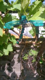 Dragonfly garden image tol Optimized-edt 7