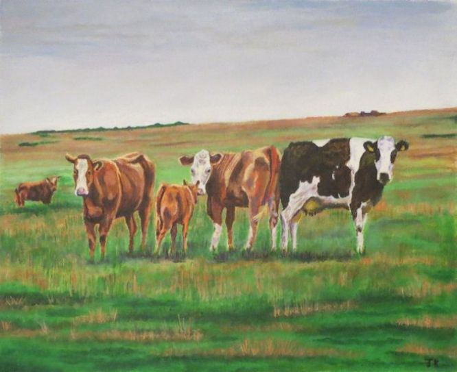 Cattle near Pitlochry