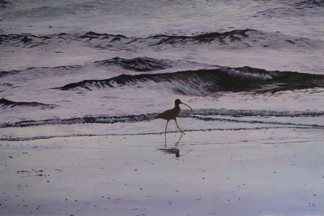 Curlew feeding on the beach