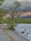 WS14 Derwentwater Tree