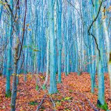 015.Blue Trees