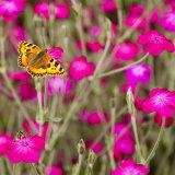 043.Butterfly