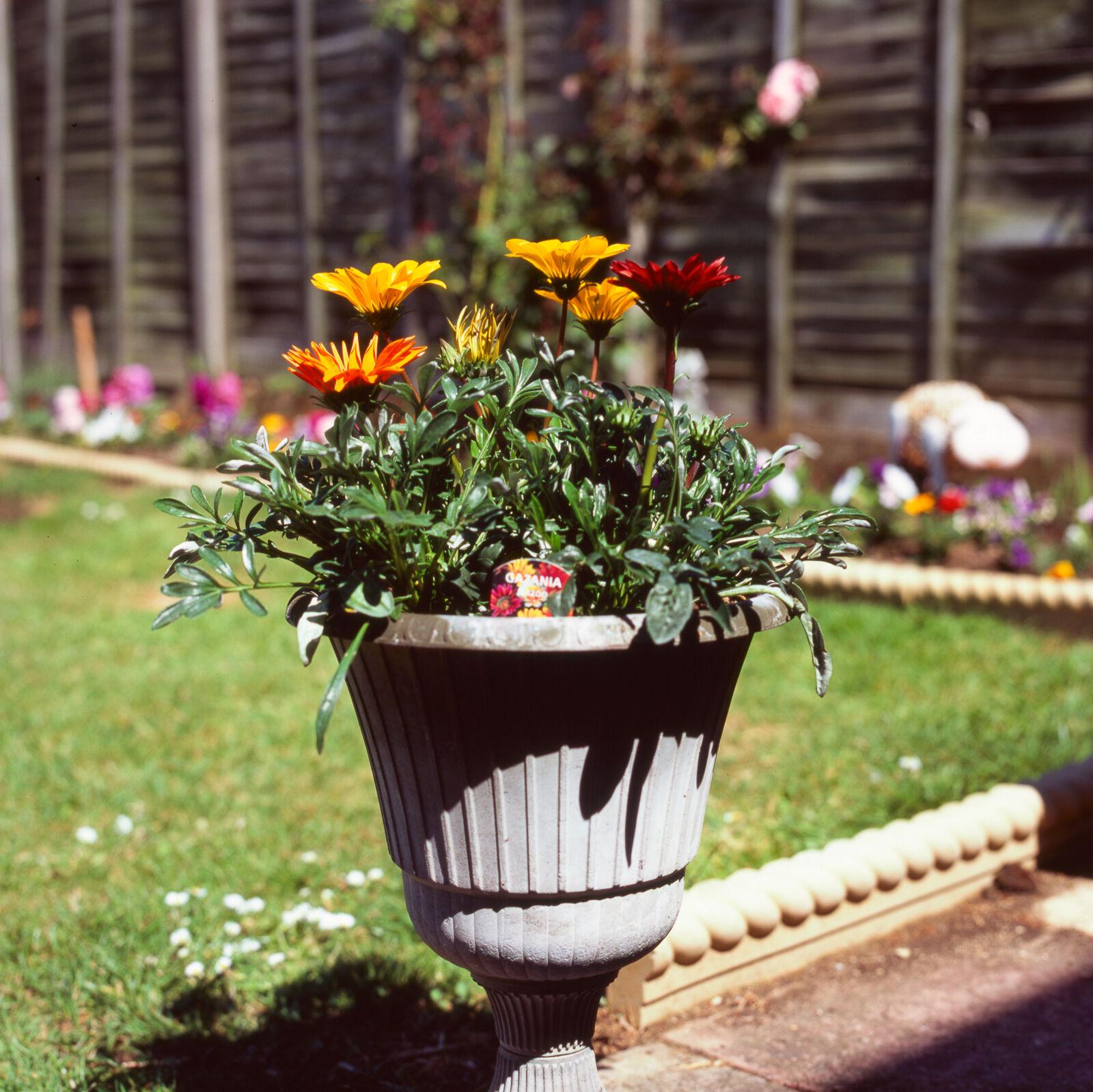 Flower pot,