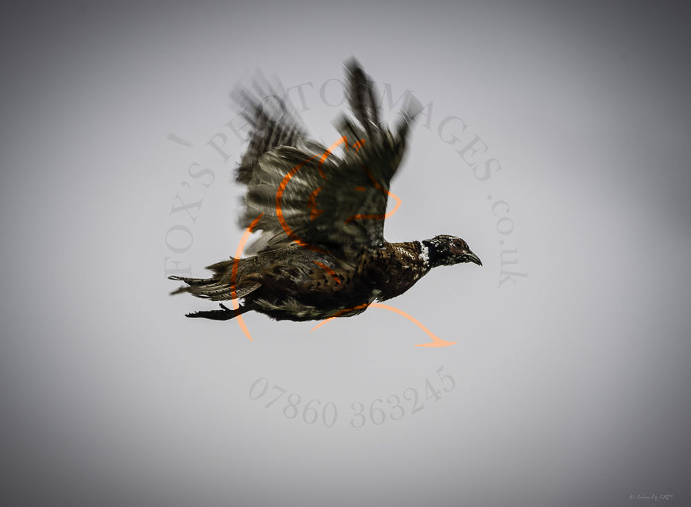 Chicksands 12th Oct-5196