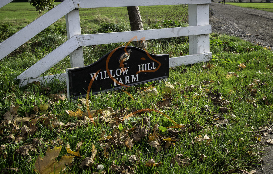 Willow Hill 24-10-18-6755