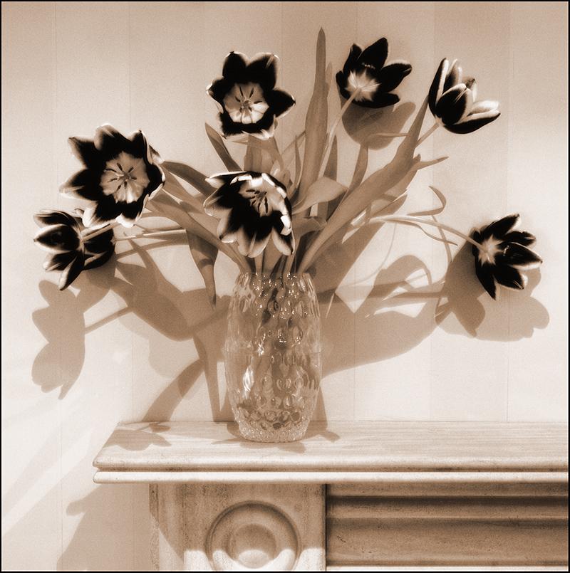 tulips, duotone