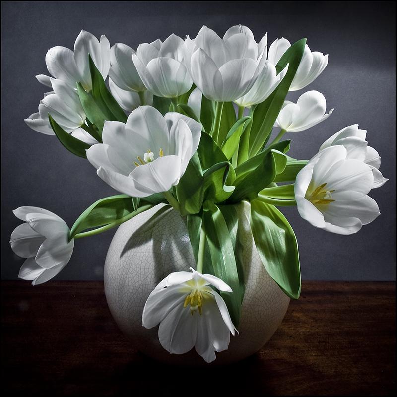 white tulips still life