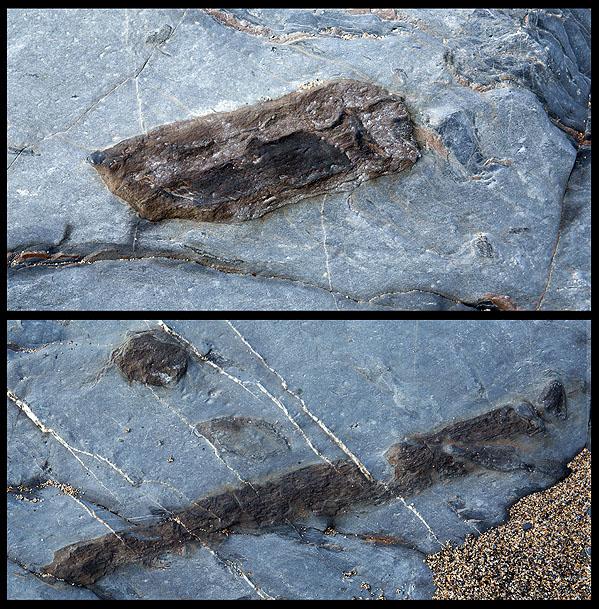Fossil Wood -  Jangye - Ryn Cove (S22)
