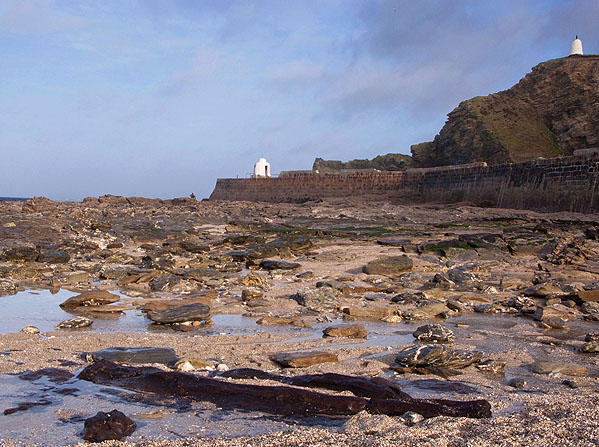 Prehistoric Forest - Portreath - (S15)