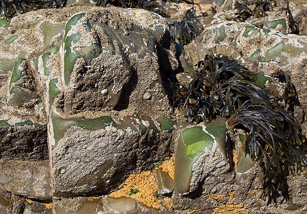 Lichen - Verrucaria Mucosa
