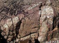 Troctolite Veins - Coverack (S19)