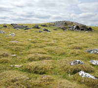 Cox Tor - Ant Mounds