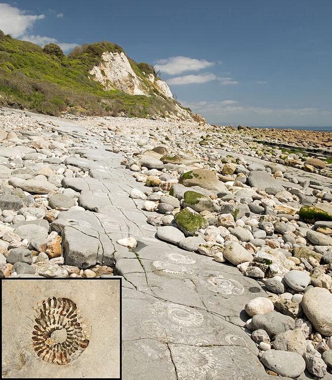 Ammonites - The Slabs (S40)