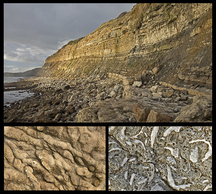 Fossils - Ringstead Bay (S43)