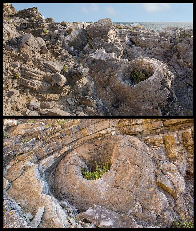 Fossil Forest - Thrombolites - Lulworth (S43)
