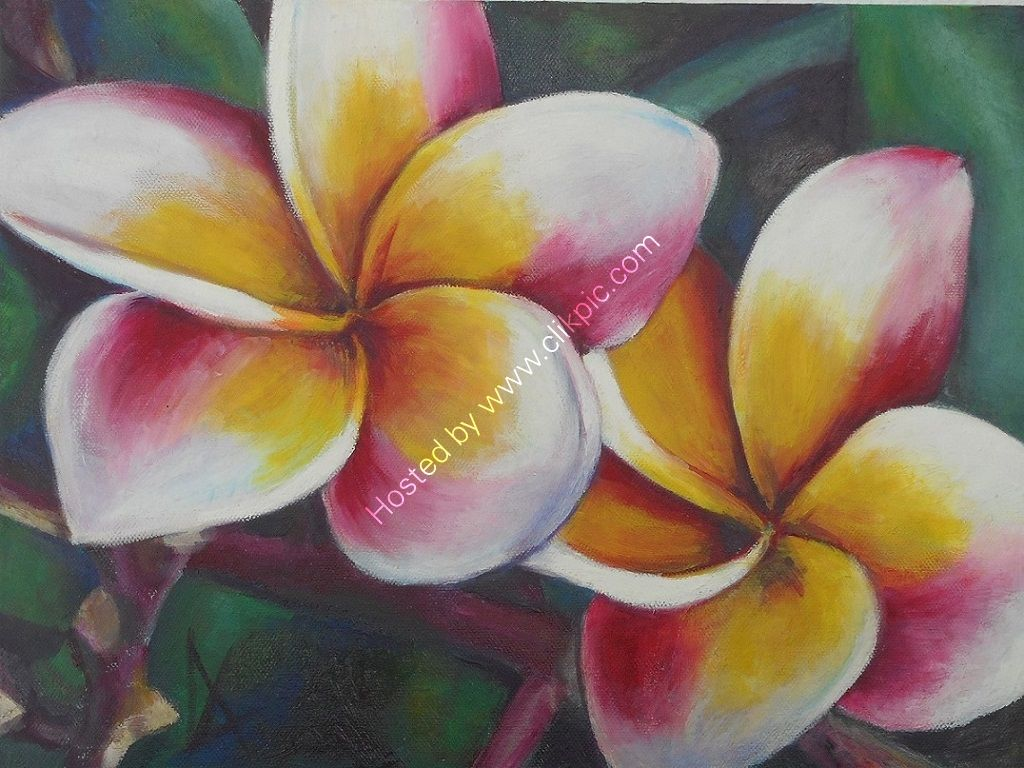 An ArtPrint showing a close-up of colourful tropical frangipani flowers