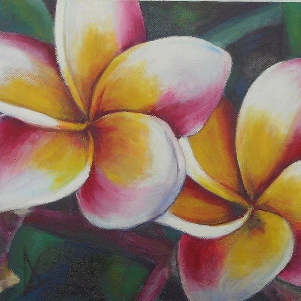 frangipani, tropical, flower, colourful