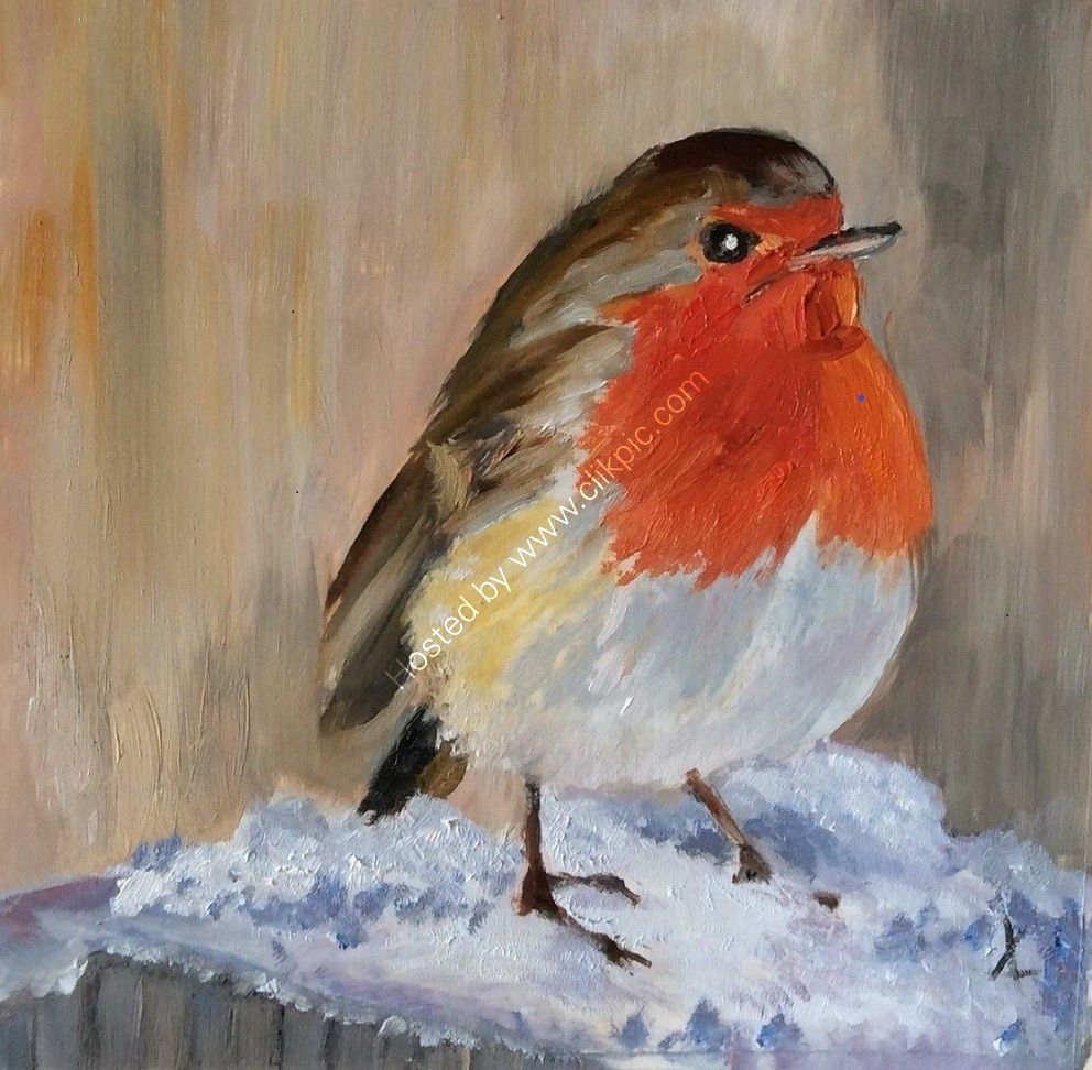 robin, snow, cold, winter, christmas,
