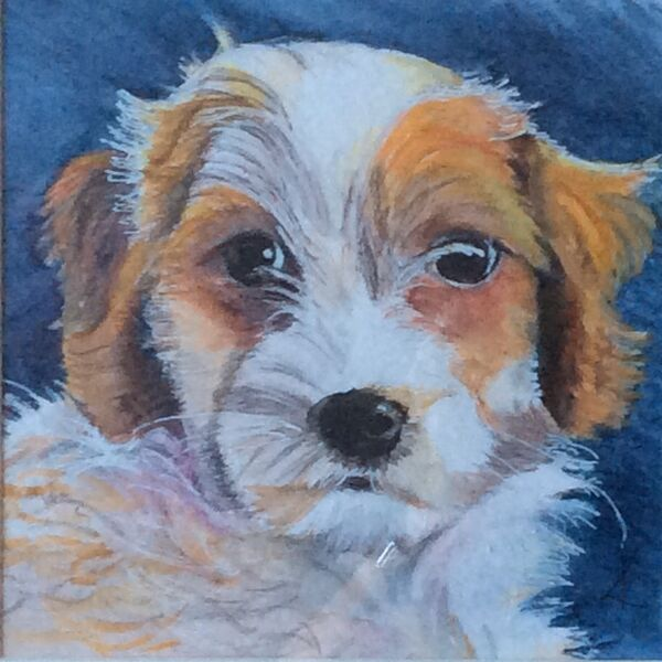pet, portrait, puppy, mixed media