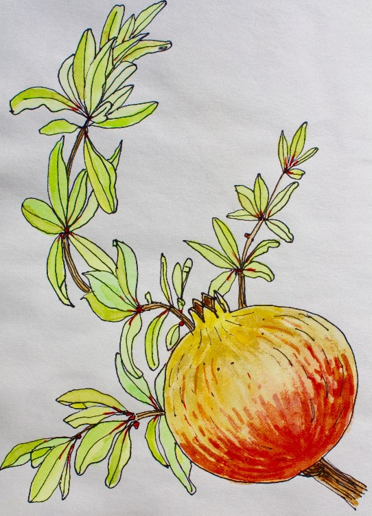 POMEGRANATE-CRETE-PEN AND WATERCOLOUR