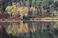 AUTUMN REFLECTIONS (Loch Coulin)
