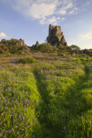 BLUEBELLS AT ROCHE ROCK