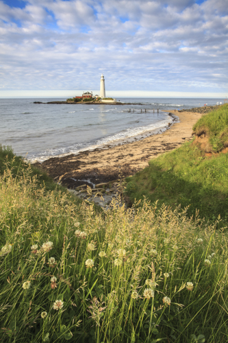 CLIFF TOP VIEW (St Mary's Lighthouse)