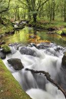 Falls View (Golitha Falls)