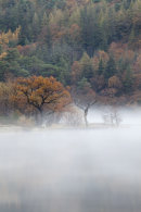 TREE'S IN THE MIST (Crummock Water)