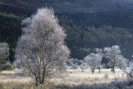 FROSTY TREE'S (Glen Goil)