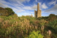 LATE SUMMER AT WHEAL PEEVOR