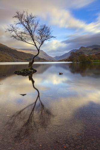LONE TREE (Llyn Padarn)