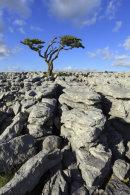 LONE TREE (Twisleton Scar)