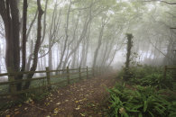 MISTY TREE'S (Peak Hill near Sidmouth)