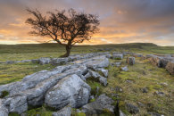 LONE TREE AT SUNSET (Winskill Stones)