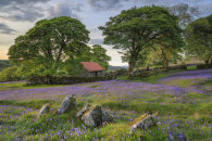 ROCKS AND BLUEBELLS (Emsworthy Mire)