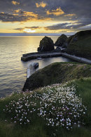 SPRING FLOWERS AT SUNSET (Mullion Cove)