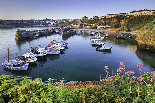 SPRING AT NEWQUAY HARBOUR