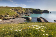 SPRING FLOWERS AT MULLION COVE