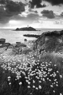 THRIFT AT GODREVY