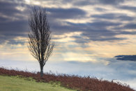 TREE ABOVE THE USK VALLEY