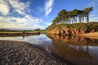TREE'S AT BUDLEIGH SALTERTON