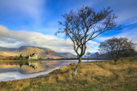 TREE'S AT LOCH AWE
