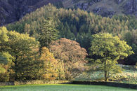 TREE'S NEAR BUTTERMERE