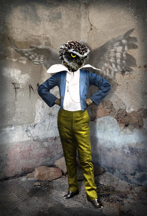 'Urban Owl'